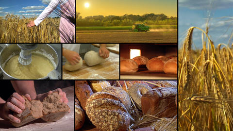 baker montage wheat to bread 10865 Stock Video Footage