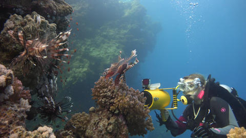 Underwater videographer, shooting lionfish. Diving in the Red sea near Egypt Live Action