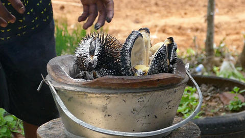 Durian bbq Footage