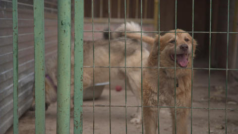 Dogs in pet shelter barking Footage