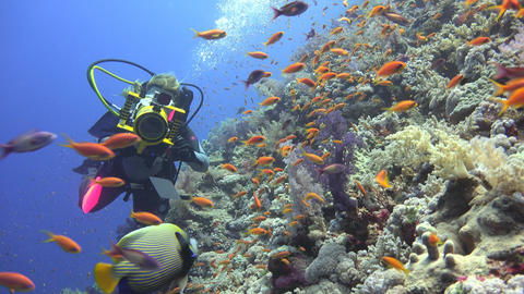 Underwater videographer, shooting Imperial angel fish at the reef Elphinstone. D Footage
