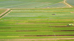 Agricultural land with green crops from above Footage