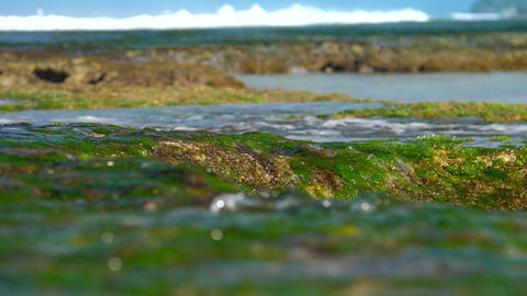 transparent ocean water flows over green seaweed slow Live Action