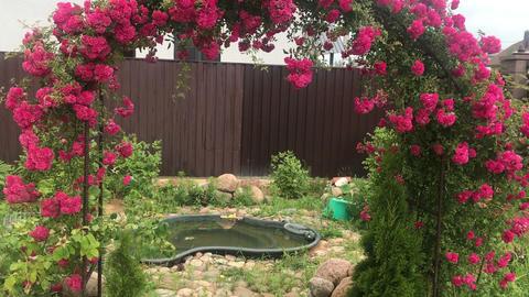 arch of climbing rose, beautiful cozy home interior, landscape design, wonderful Footage