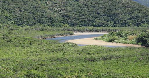 Mangrove forest in Amami oshima Kagoshima sunny day Footage