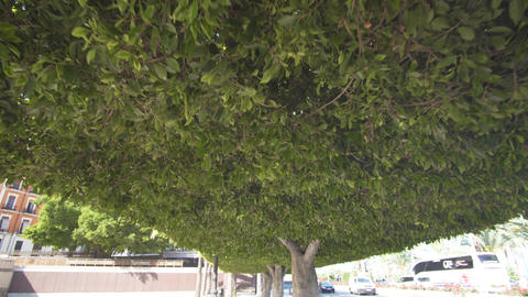 Green forest overhead. Walk along the green street Footage