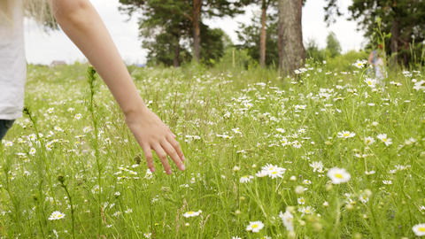 Girl Walking Touching Green Grass and Chamomile Footage