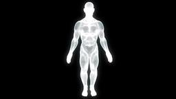 Human Wireframe Hologram Animation