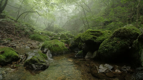 UHD / HD / free_SD Forest and Mist Footage