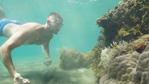 Man traveller learns sea life diving near the coral reefs in ocean on vacation Live Action