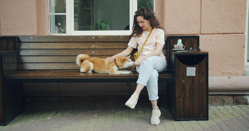 Female dog owner caressing shiba inu puppy sitting on bench in street cafe Footage