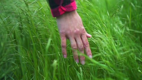 Female hand touches the grass in slow motion at sunset close-up Footage