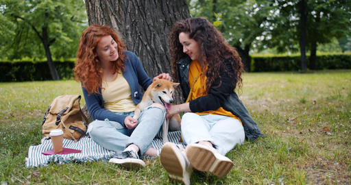 Slow motion of girls sitting on lawn in park with cute dog talking having fun Footage