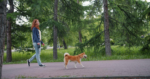 Side view of attractive lady walking in park with adorable shiba inu dog Footage
