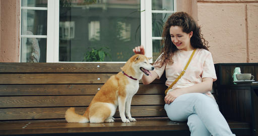 Happy young woman petting cute shiba inu puppy sitting on bench outdoors in cafe Footage