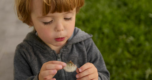 Interested child blowing on dandelion Live Action