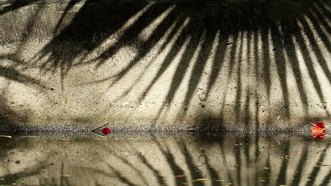Beautiful shadow of Chinese fan palm tree leaves on canal wall and water 실사 촬영