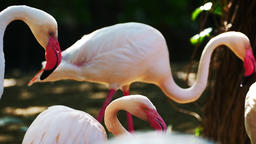 Cute Flamingo in nature Live Action