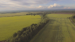 Aerial view:Flying over green field Footage