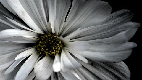 Grunge Flower Background Footage