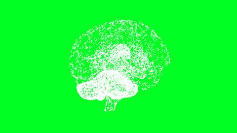 Brain 13 Animation