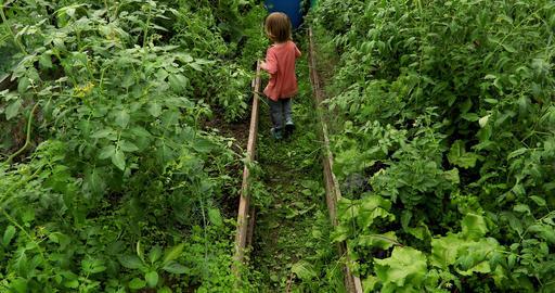 Toddler strolling in green green garden Live Action