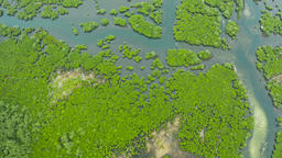 Aerial view of Mangrove forest and river Footage