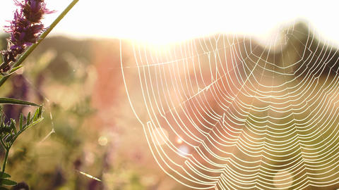 Spiderweb on wildflowers against the sun rays close-up. Connection with nature Footage