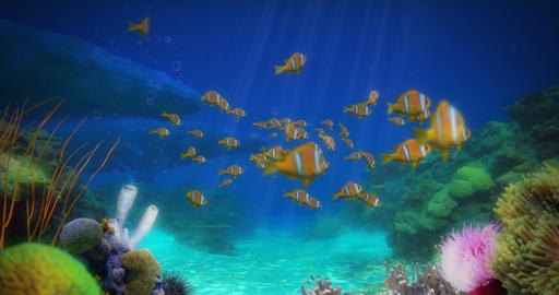 Clownfish and Whales Animation Animation