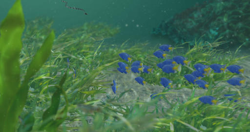 Fish in Seagrass Animation Animation