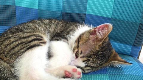Baby Cat Sleeping On Sofa Footage