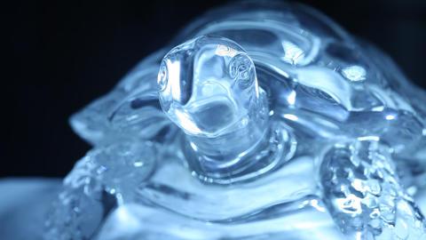 Crystal Tortoise Footage