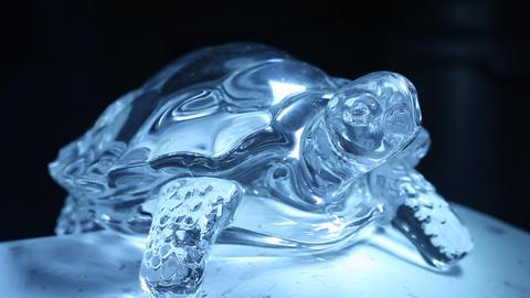 Crystal Tortoise Live Action