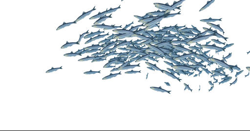 Isolated School of Fish Animation