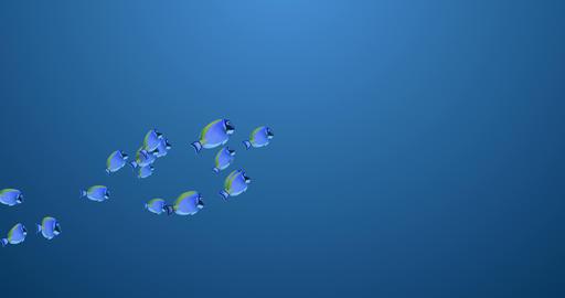Isolated School of Surgeonfish Animation