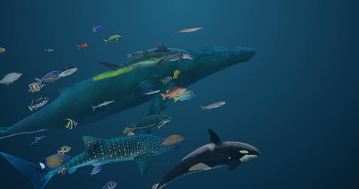 Sea Life Variety Animation