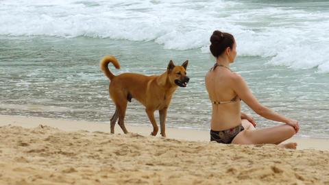 Dog walked on the beach Footage