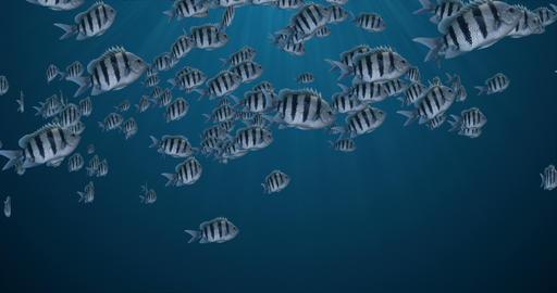 School of Fish Animation