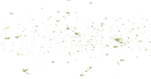 Mayflies Swarm Animation