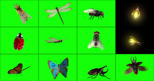 Standing 3D Insects Animation
