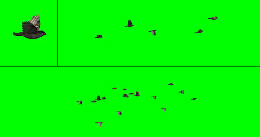Flock of Birds - Sparrows CG動画