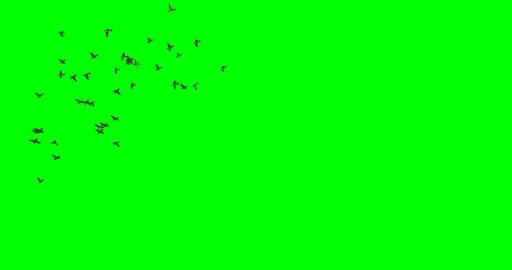 Flock of Birds Flying Around CG動画