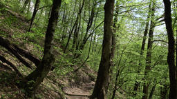 Tilt up from fine ground path along forested mountain slope, foliose trees Footage