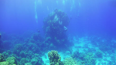 Divers Swims over Coral Reefs Footage