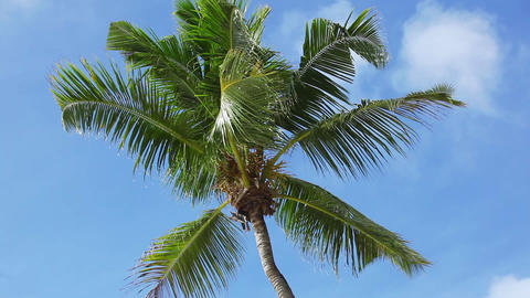 Tropical green palm tree with blue sky moving ビデオ