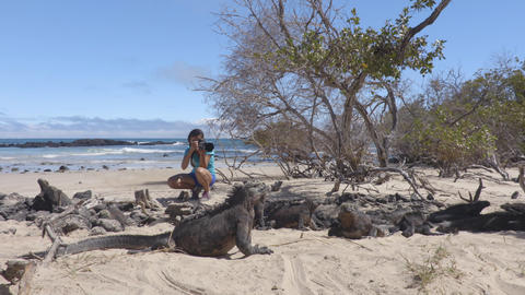 Ecotourism tourist videographer taking wildlife videos on Galapagos Islands Live Action