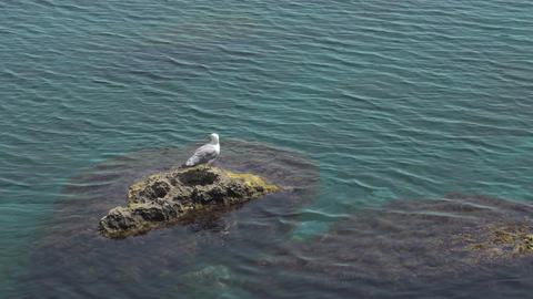 Lonely Seagull Sitting On Rock In Sea GIF