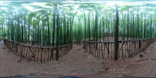 360 VR Bamboo Forest 5K Video Collection