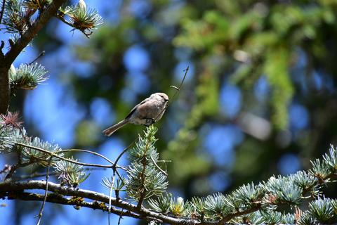 A Bushtit bird perched on a tree branch Photo