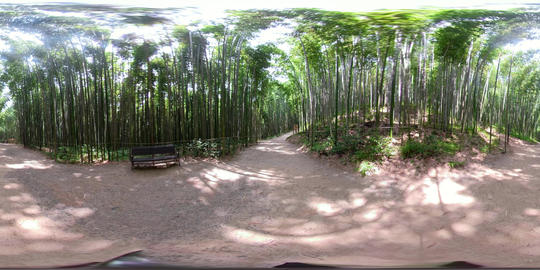 360 VR Bamboo Forest 5K Video Collection 1